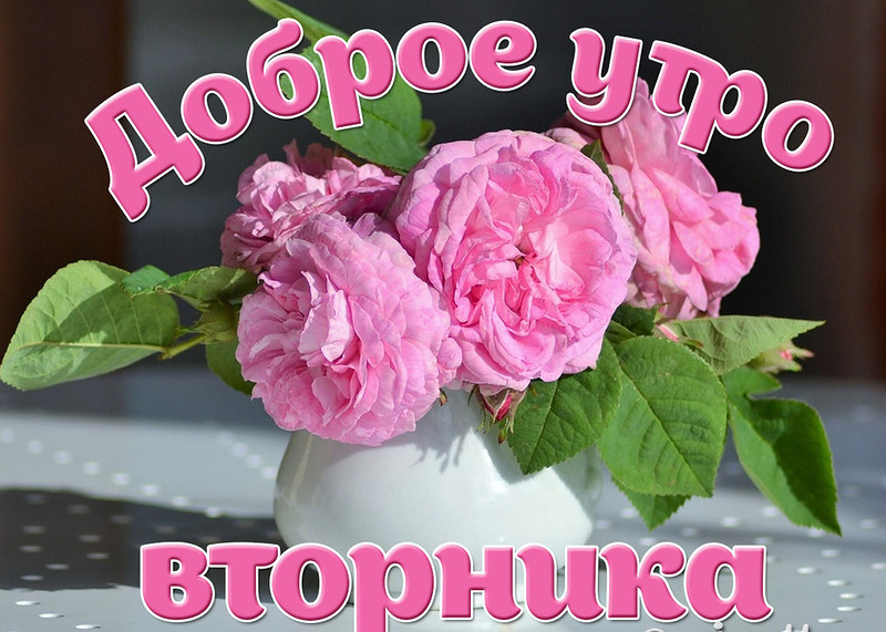 Днем, картинки доброго утра друзья вторник лето