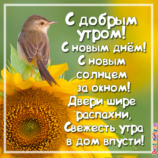 Поздравление с добрым утром с картинками и стихами женщинам
