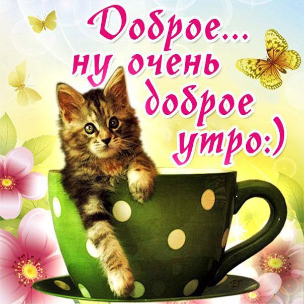 Пузыри воде, картинки с добрым утром котенок для мужчины